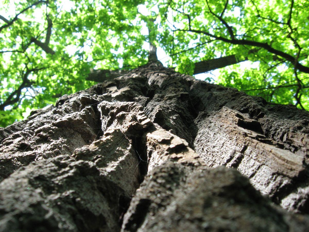 Nie wycinajcie drzew w Krakowie – mój prywatny manifest
